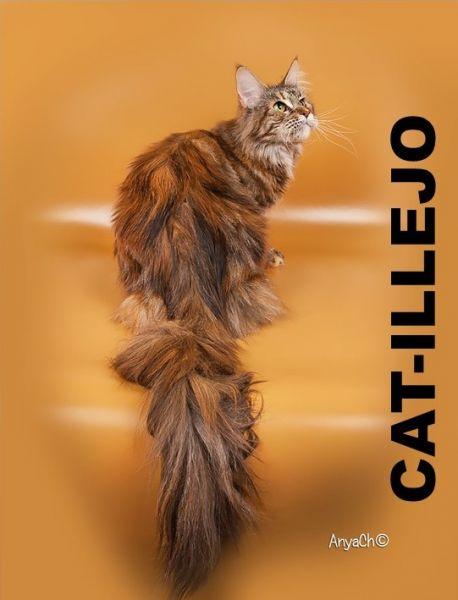 CAT-ILLEJO