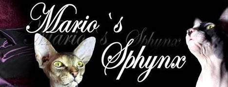Marios Sphynx