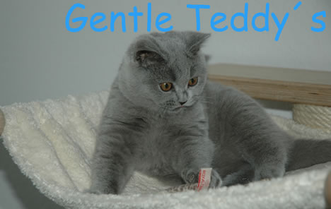 Gentle Teddy`s