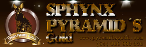 Sphynx Gold Cat