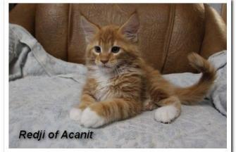 Redji of Acanit