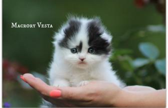 Macrory Vesta