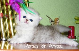 Regaliz de Aryssa