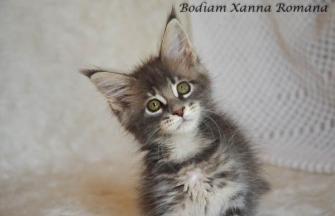 Bodiam Xanna Romana