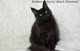 Bodiam X'Mystic Black Diamond