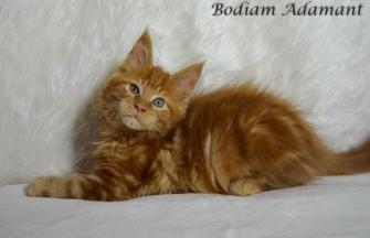 Bodiam Adamant