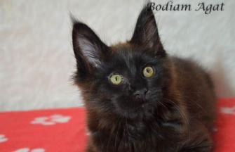 Bodiam Agat