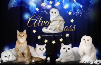 AlvaRoss