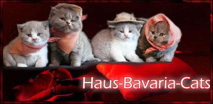 Haus-Bavaria-Cats