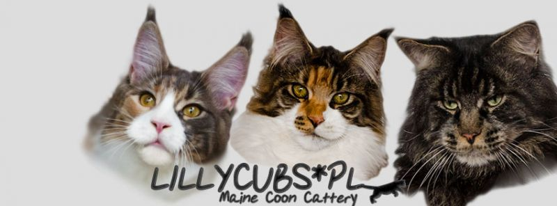 Lillycubs