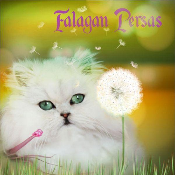 FalaganPersas