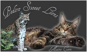 Pediro Sweet Lions