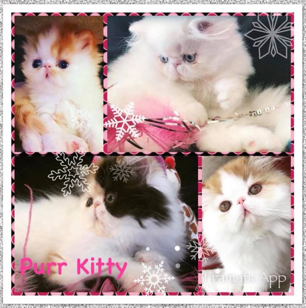 Purr Kitty