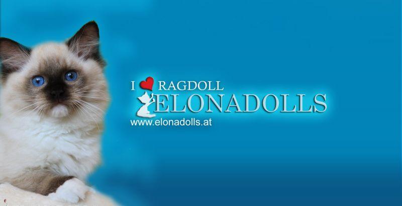 Elonadolls Ragdolls