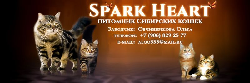 SPARK HEAT