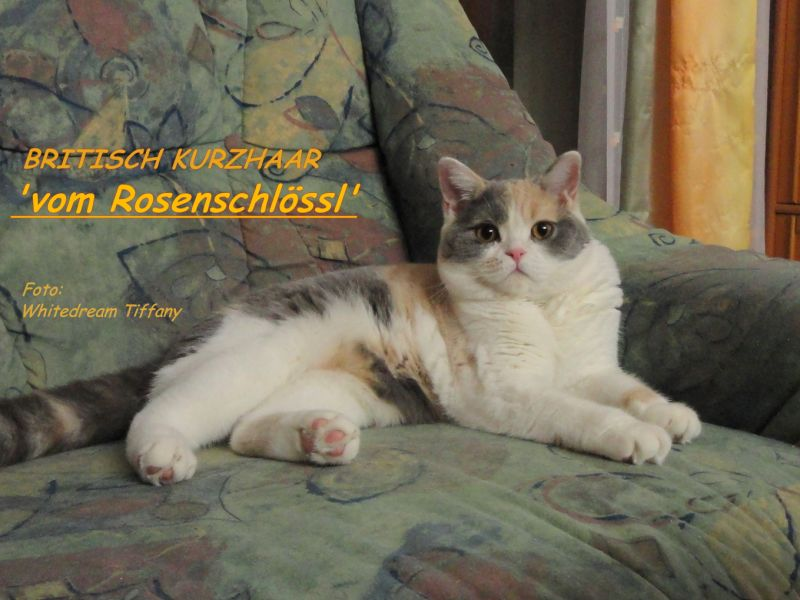 vom Rosenschlössl A