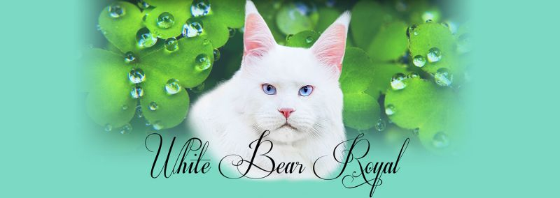 White Bear Royal