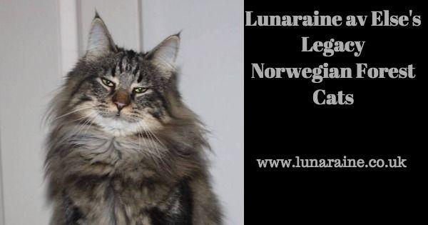 Lunaraine av Else's Legacy