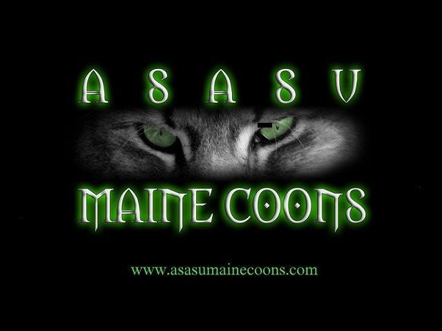 Asasu
