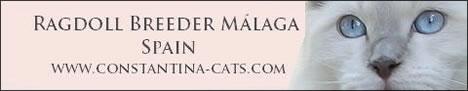 Constantina Cats