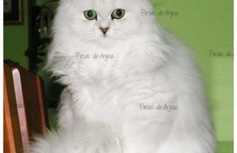Mae-sophie de de Aryssa