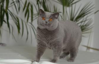 IC Herek Alfa-Pol-Cat*CZ