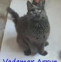 Vademar Arryn