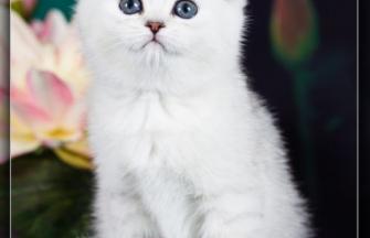 Camilla silver blue