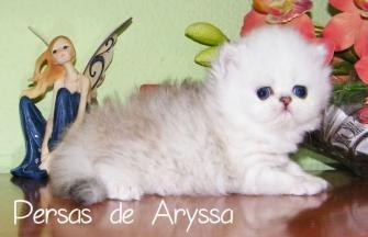 Sugus de Aryssa