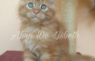 Alvin De Lisbeth
