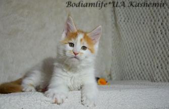 Bodiamlife*UA Kashemir