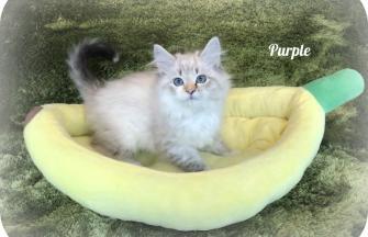 Purple (temporary name)