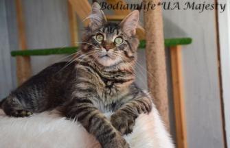 Bodiamlife * UA Majesty