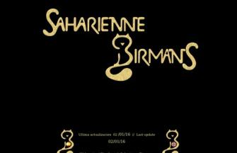SAHARIENNE BIRMANS