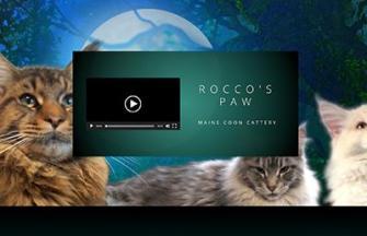 Rocco's Paw